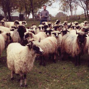 Besök på Bosnisk fårgård